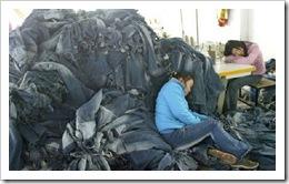 ChinaBlueJasmine-and-Liping-crash
